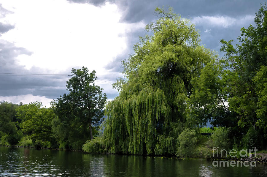 weeping willow by the river by Michelle Meenawong