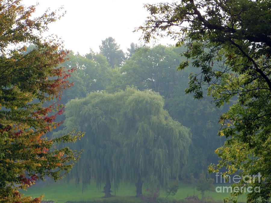 Weeping Willow Trees by Rockin Docks