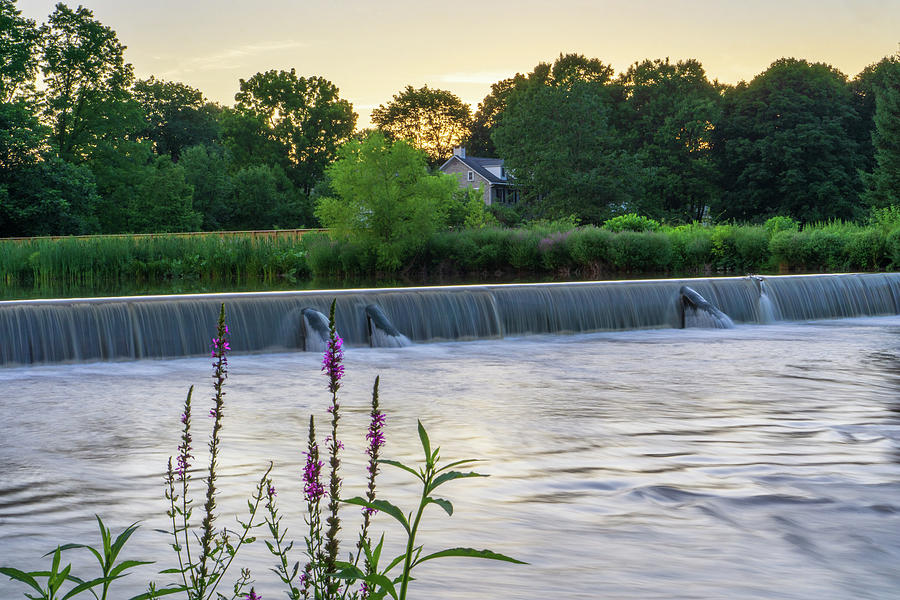 Wehr's Dam with Flowers by Jason Fink