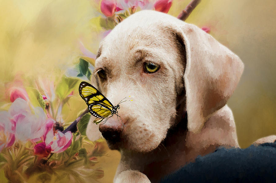 Weimaraner Puppy with Butterfly - Painting by Ericamaxine Price