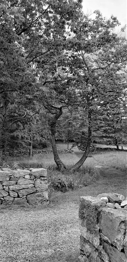WEIR FARM STONE WALLS B W by Rob Hans