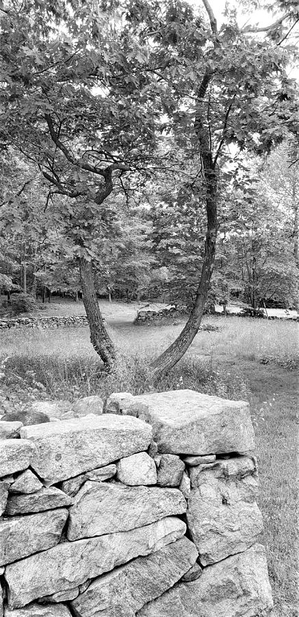 WEIR FARM STONES AND TREES B W by Rob Hans