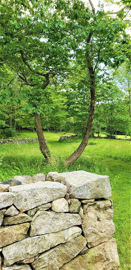 WEIR FARM STONES AND TREES by Rob Hans