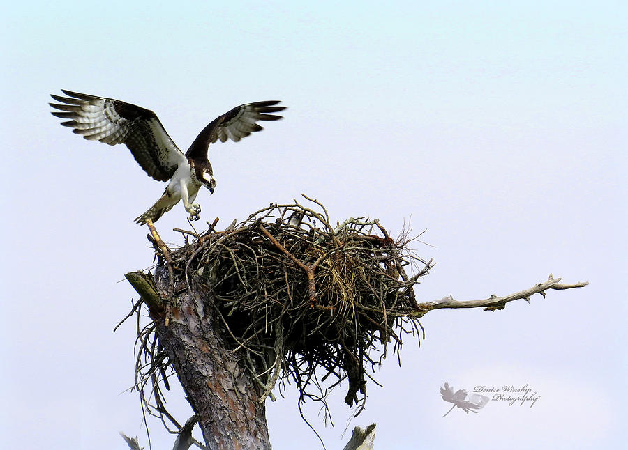 Well Nested by Denise Winship