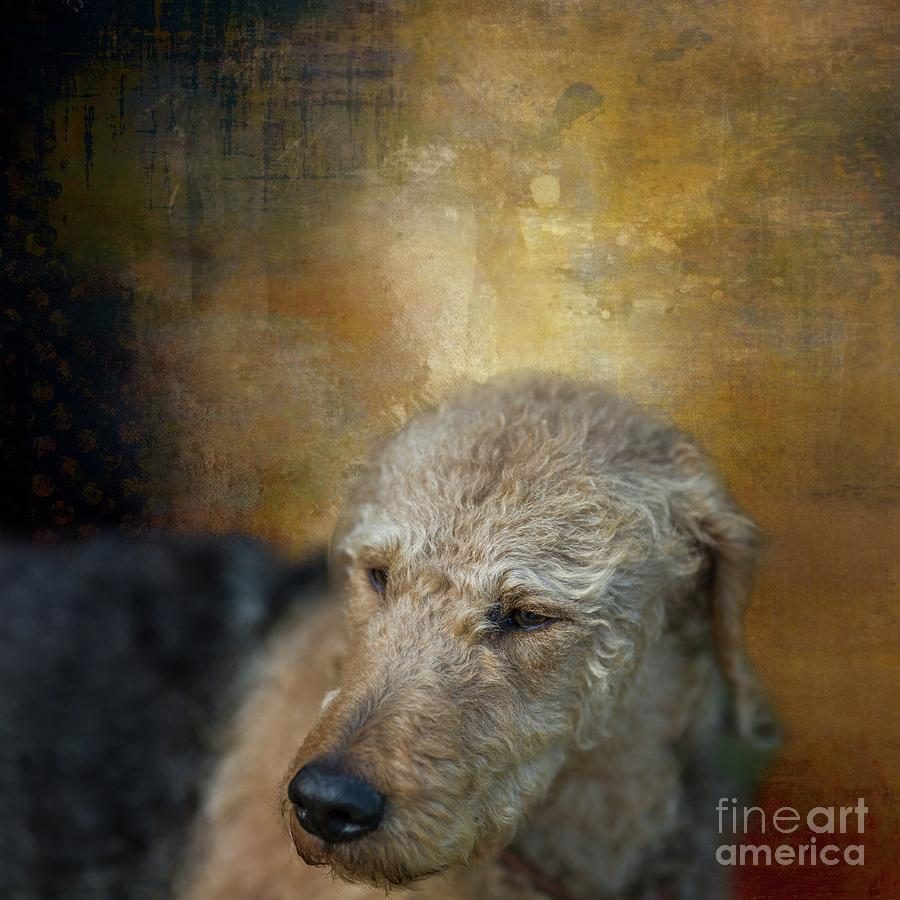 Welsh Terrier by Eva Lechner