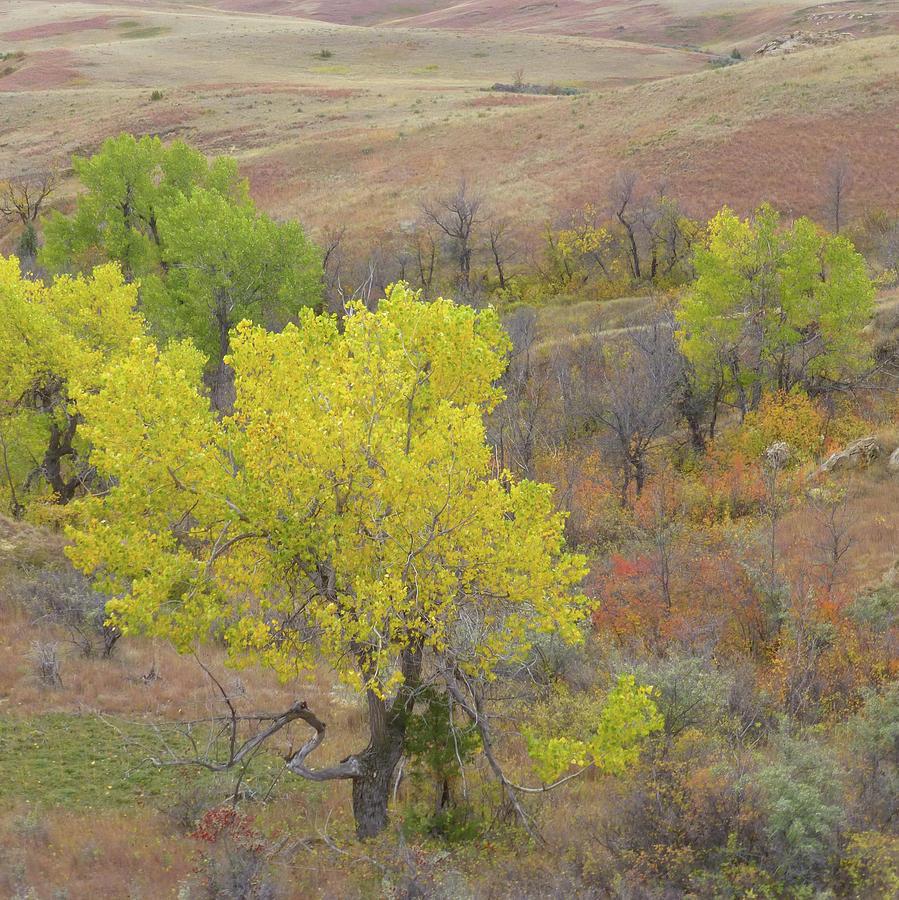 North Dakota Photograph - West Dakota September Splendor by Cris Fulton