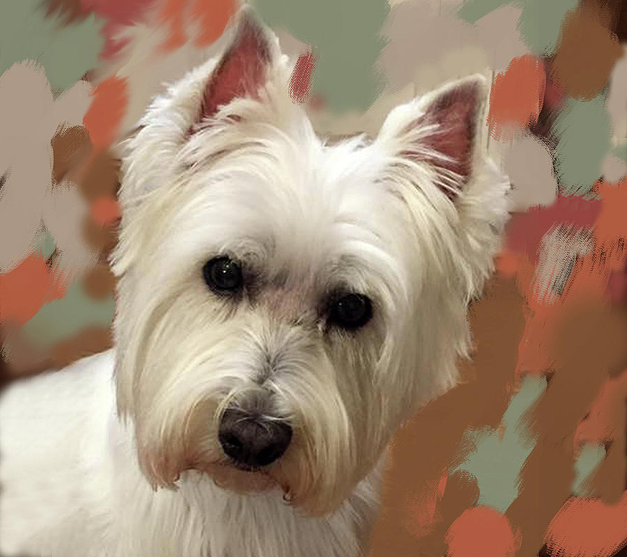 West Highland Terrier by Portraits By NC