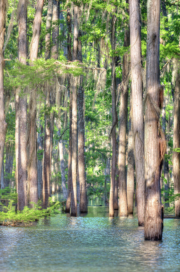 Bayou Photograph - West Monroe Cheniere Lake Bayou by Ester McGuire