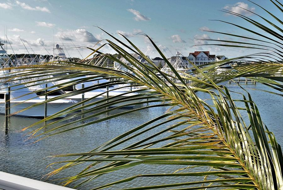 West Ocean City Marina by Kim Bemis