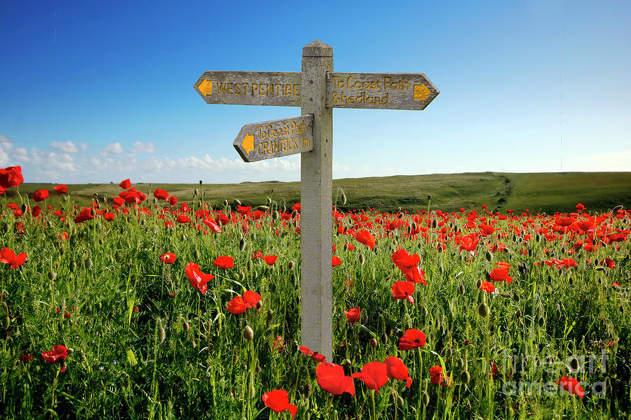 West Pentire Poppy Field Sign Photograph