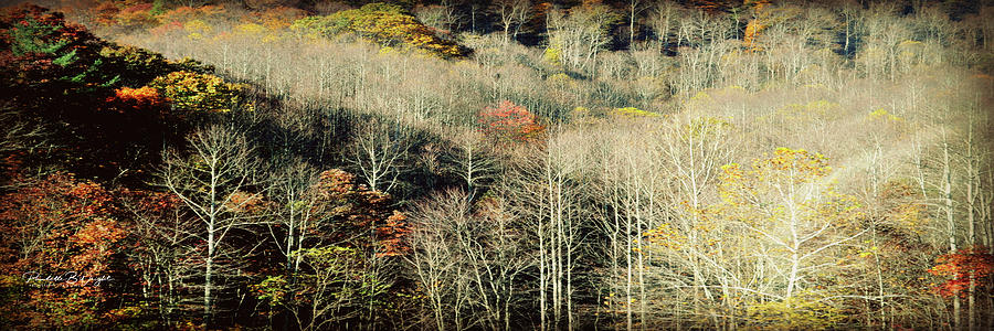 West Virginia Fall by Paulette B Wright