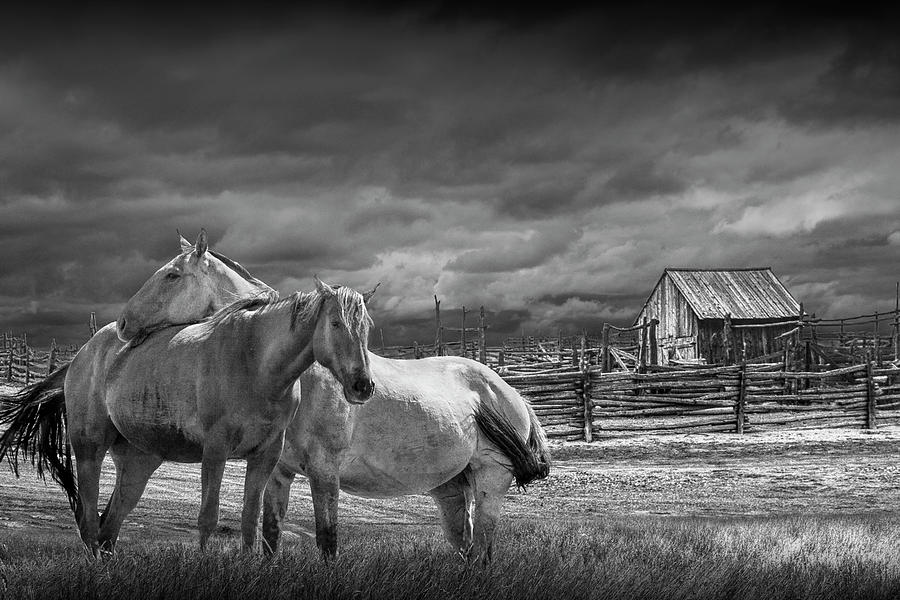 Western Horses by a Corral in Black and White by Randall Nyhof