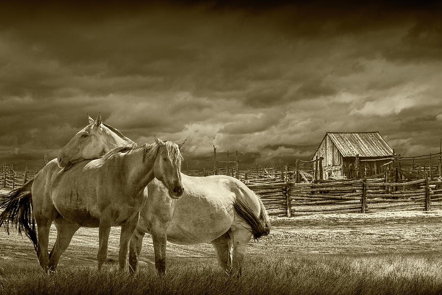 Western Horses by a Corral in Sepia Tone by Randall Nyhof