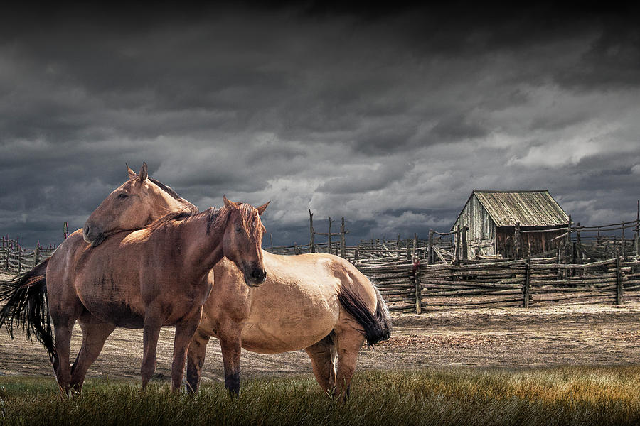 Western Horses by a Corral by Randall Nyhof