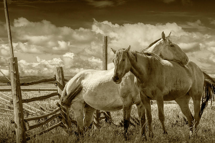 Western Horses in the Pasture by a Wooden Fence in Sepia Tone by Randall Nyhof