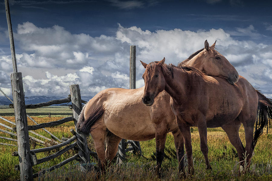 Western Horses in the Pasture by a Wooden Fence by Randall Nyhof