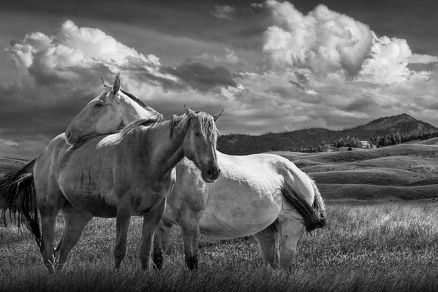 Western Horses under the Big Sky in Montana in Black and White by Randall Nyhof