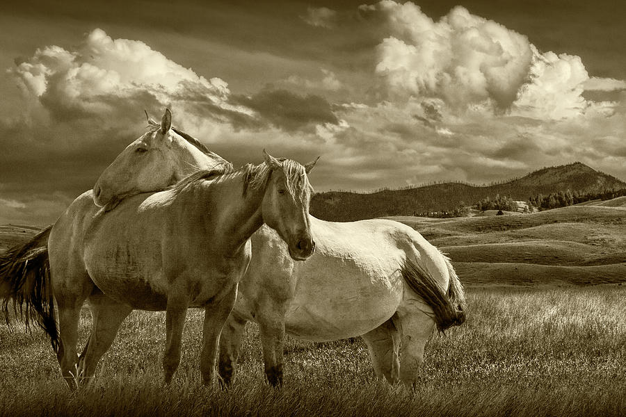 Western Horses under the Big Sky in Montana in Sepia Tone by Randall Nyhof