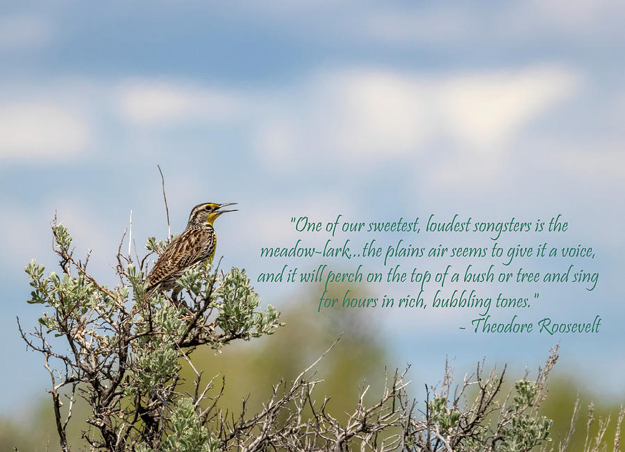 Western Meadowlark with Quote by Michael Chatt