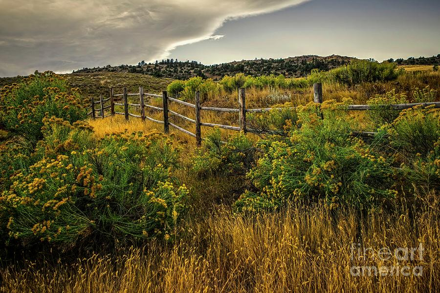 Western Rabbitbush and Fence by Jon Burch Photography
