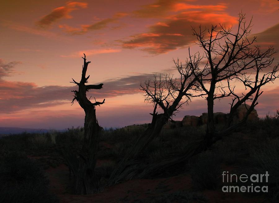 Western Trees #2 by Marcia Lee Jones