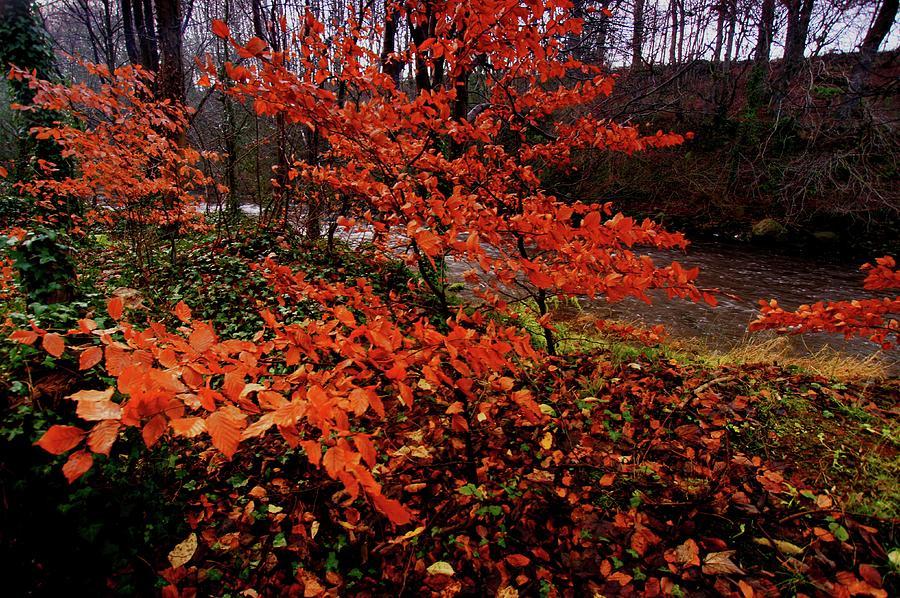 Trees Photograph - Wet Bushes by Nik Watt