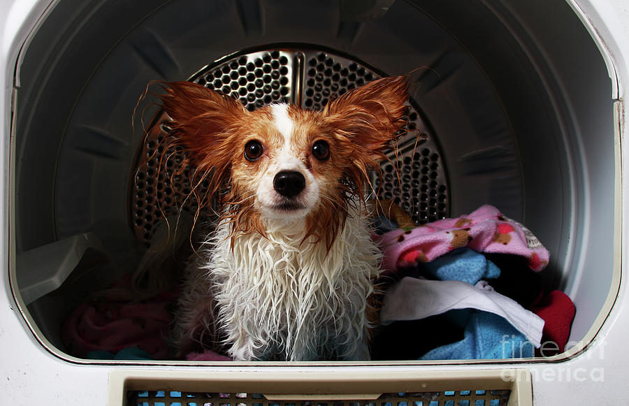 Wet Dog Ready For The Dryer Photograph by Schulteproductions