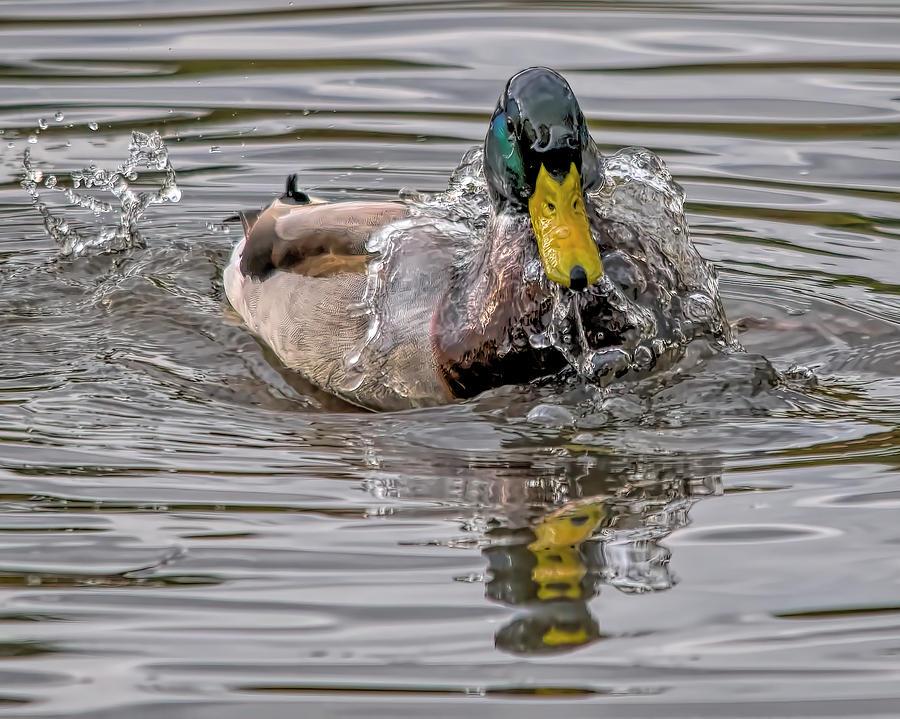 Image result for wet ducks