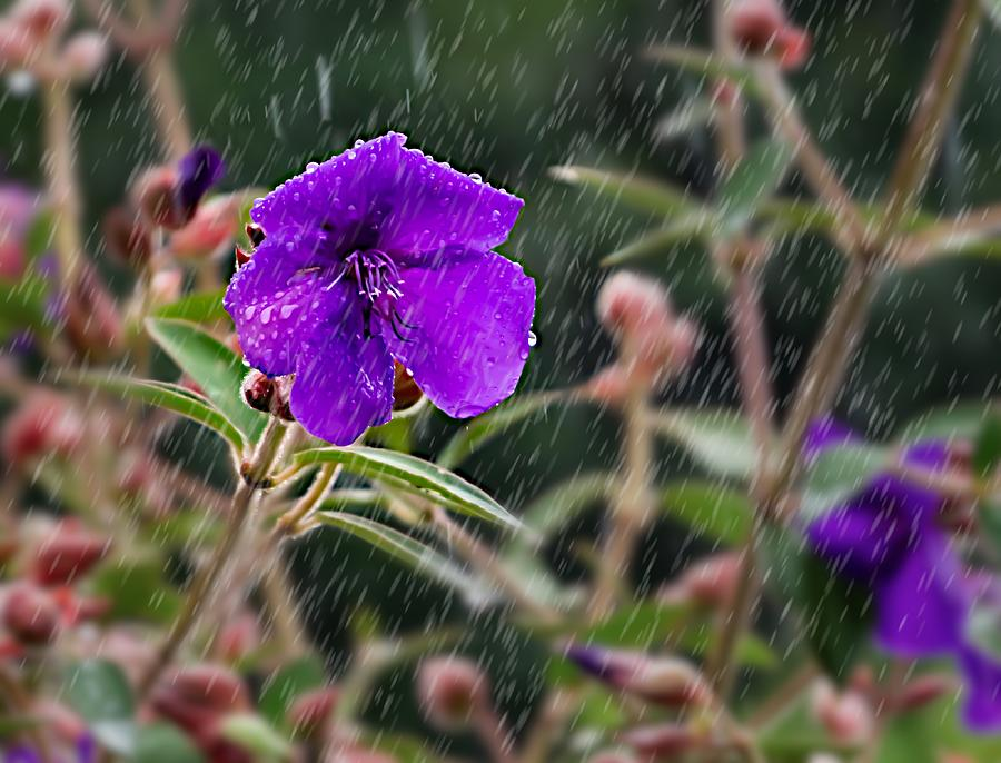 Wet flower by Silvia Marcoschamer