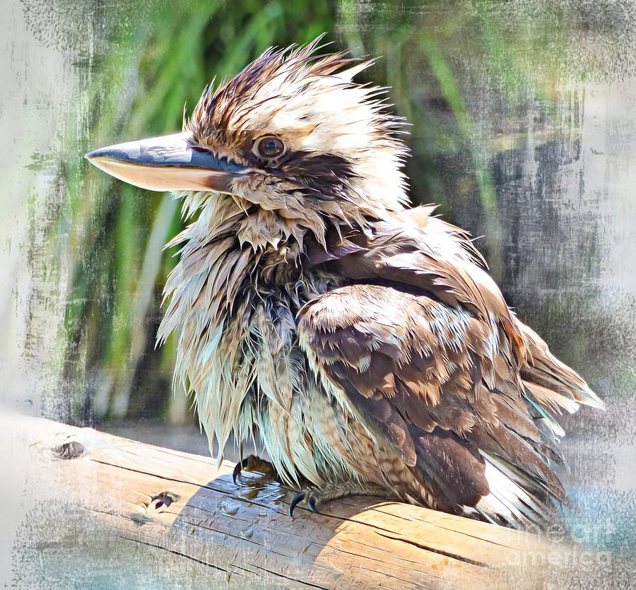 Wet Kookaburra. by Trudee Hunter