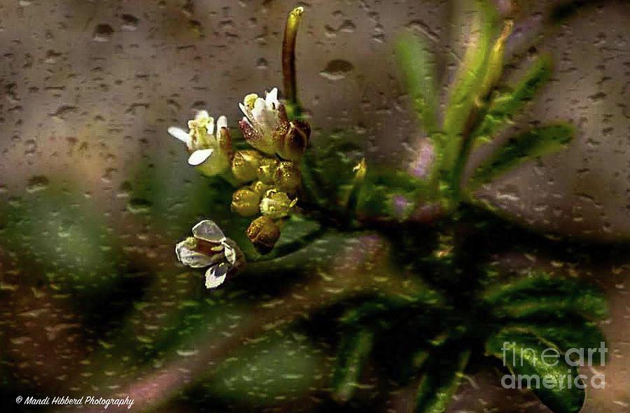 Wet Macro Weed by Mandi Hibberd