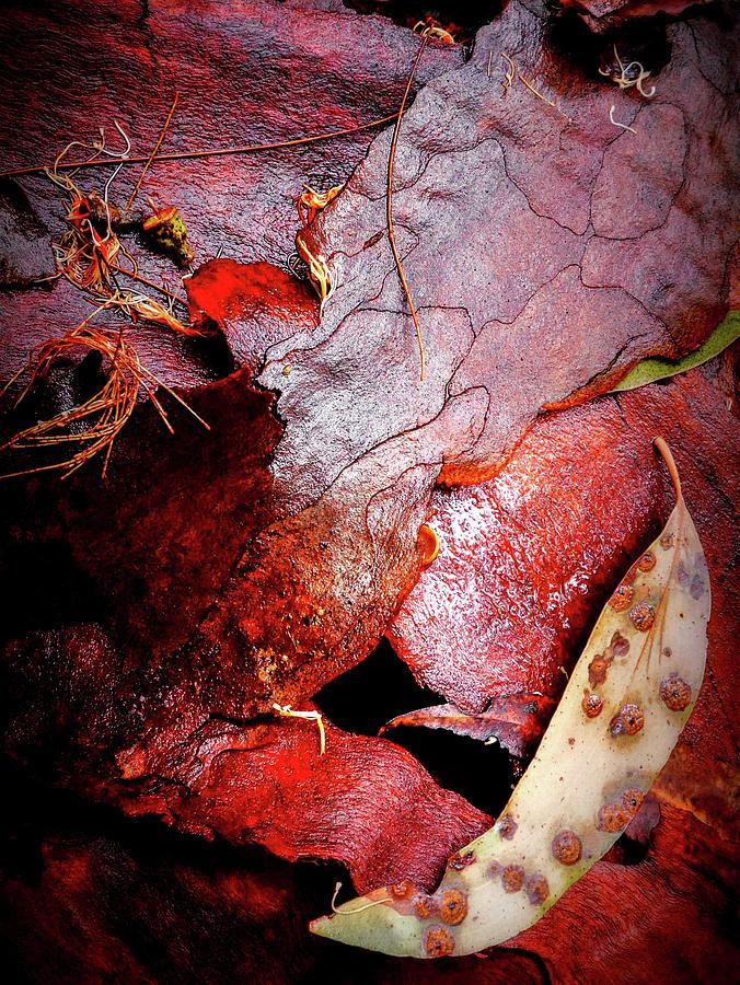 Wet Tree Bark by Lexa Harpell