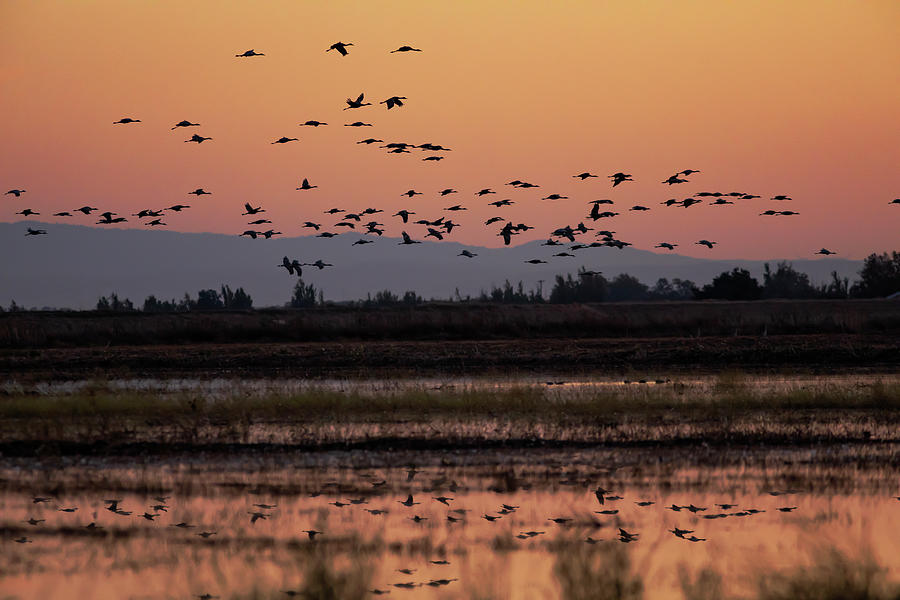 Wetland Cranes by Lisa Malecki