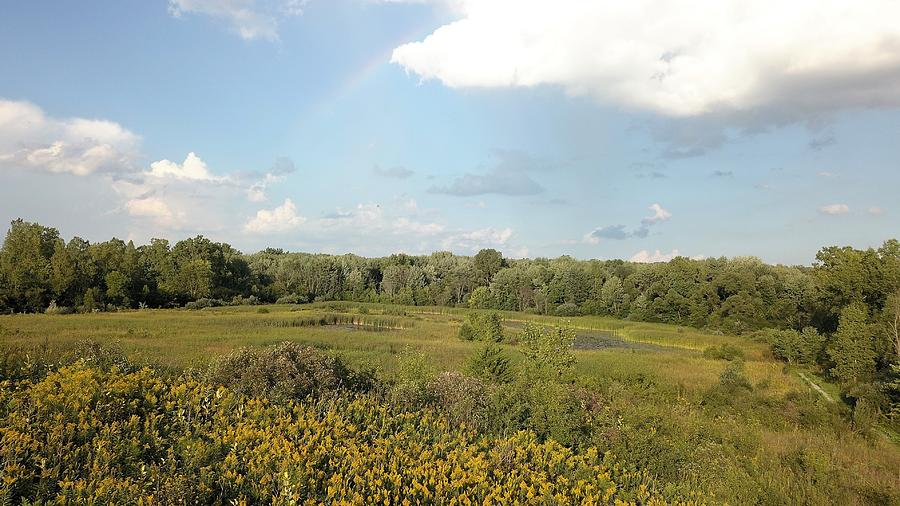 Wetlands And Woods Photograph