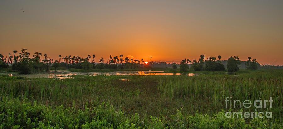 Wetlands Sunrise by Tom Claud