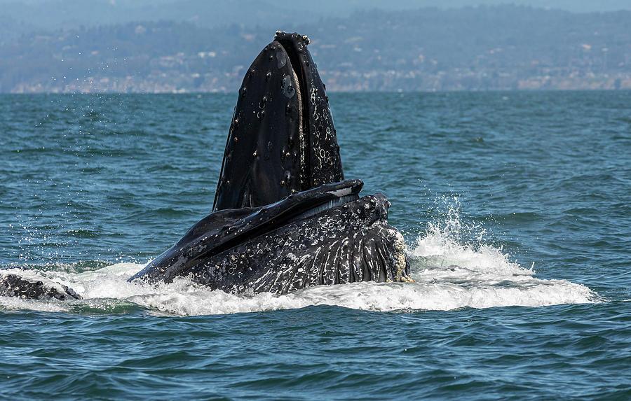 Whale Ballet by Lisa Malecki