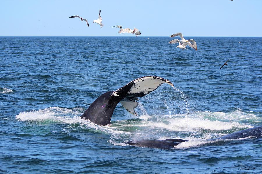 Whale Tail by Linda Sannuti