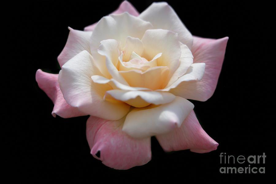 What A Beautiful Rose by Sabrina L Ryan