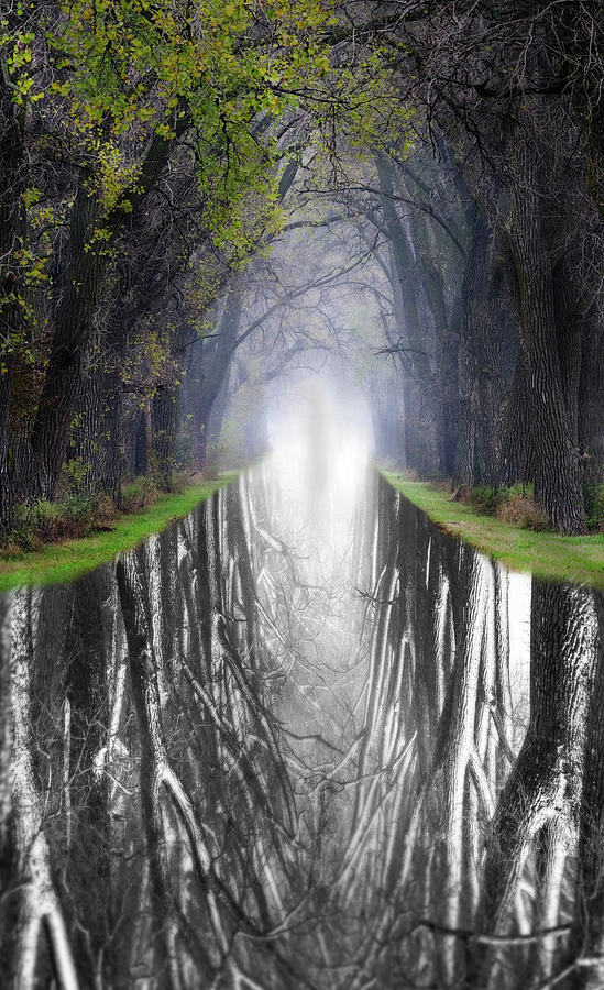 What Lies Beneath and Beyond  #2 -  Tree Tunnel at Haunted Weary Road by Peter Herman