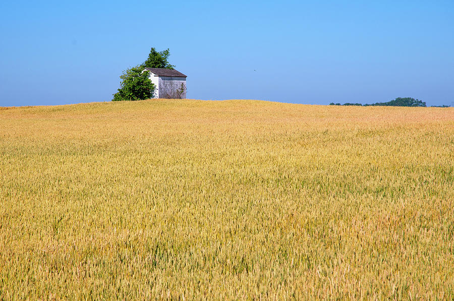 Wheat and Shed by Steve Stuller