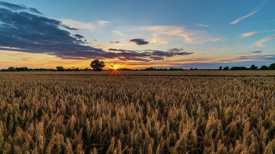 Wheat field sunset by James Billings