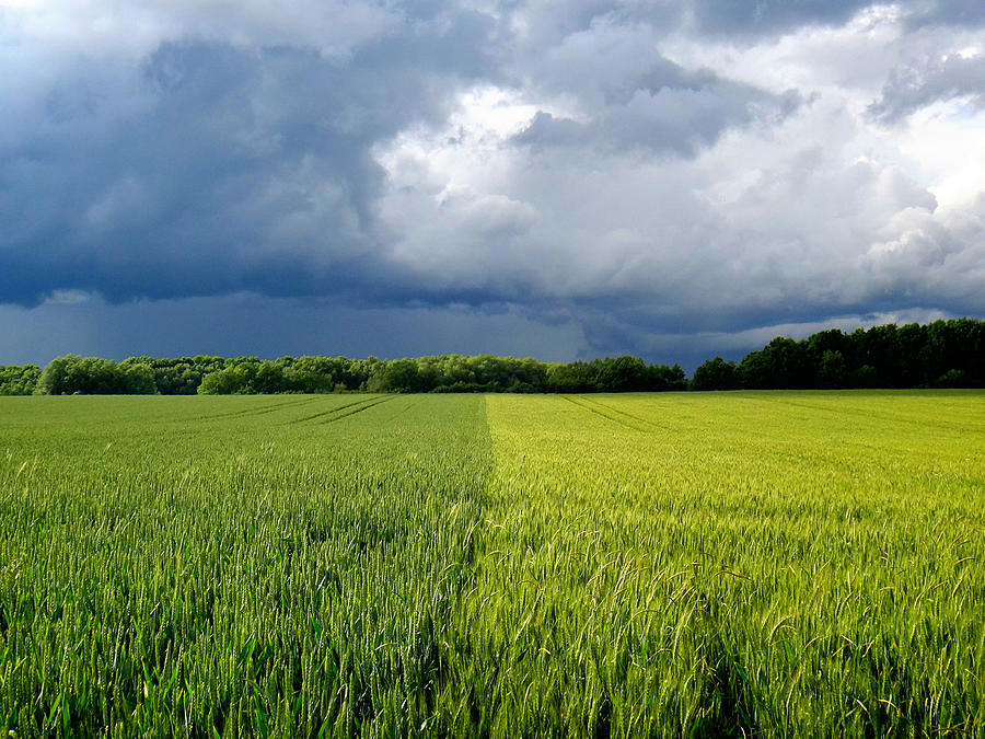Hainich Photograph - Wheat Fields in a Summer Storm by Two Small Potatoes