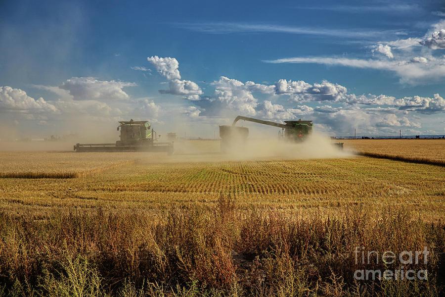 Wheat Harvest 2 Photograph