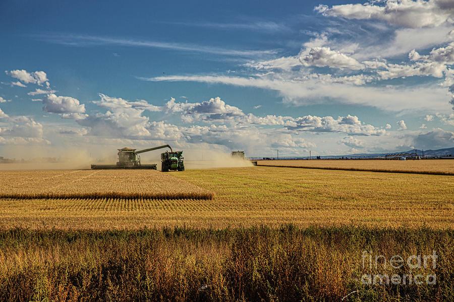 Wheat Harvest 3 Photograph