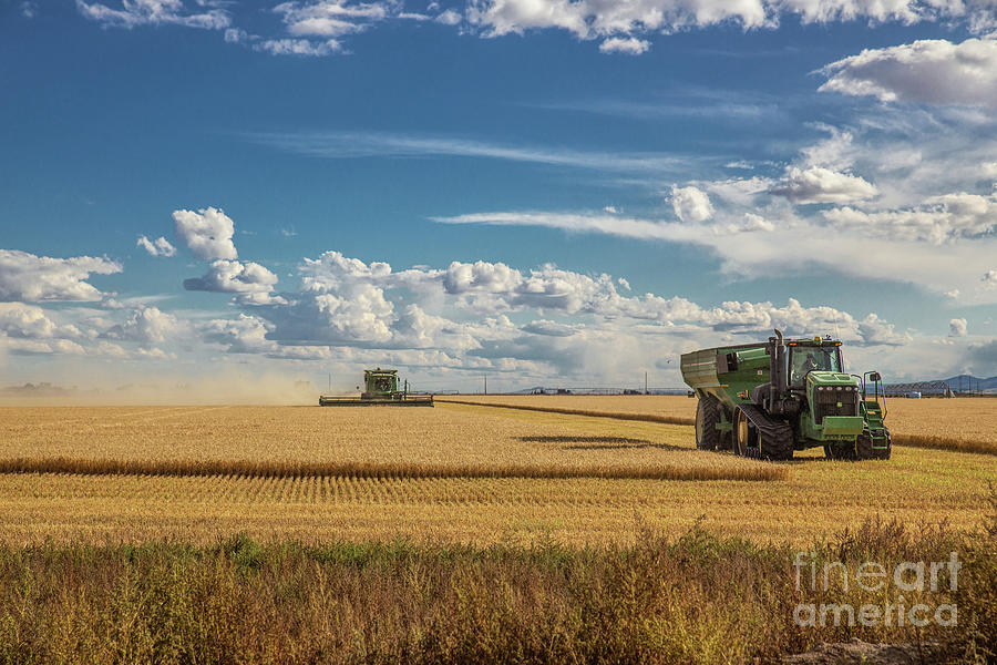 Wheat Harvest 5 Photograph