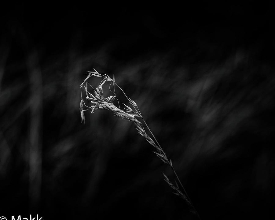 Wheat by Makk Black