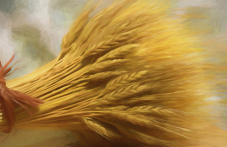 Wheat by Pamela Walton