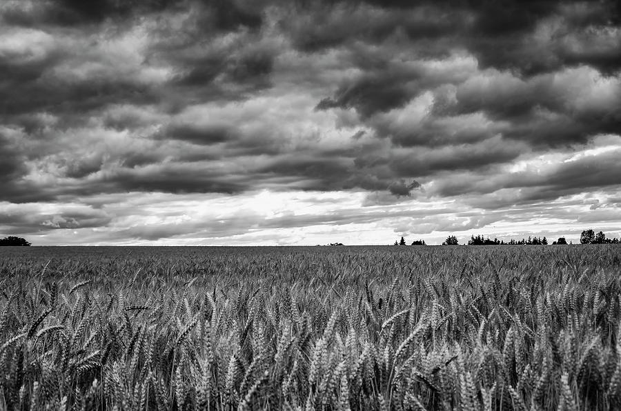 Wheat Storm by Steven Clark