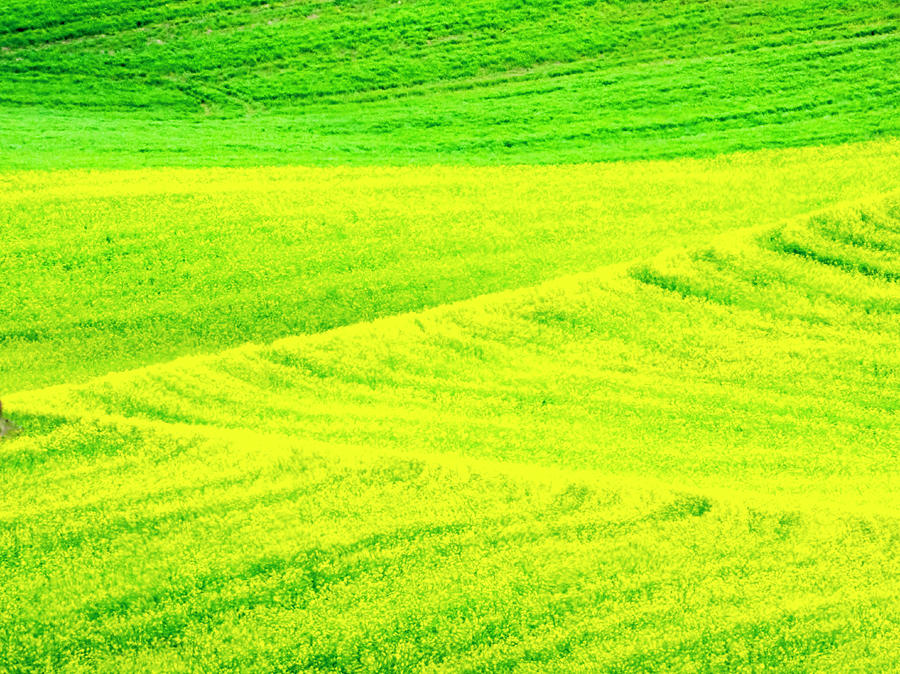 Blade Photograph - Wheel Patterns In Spring Pea Fields by Terry Eggers