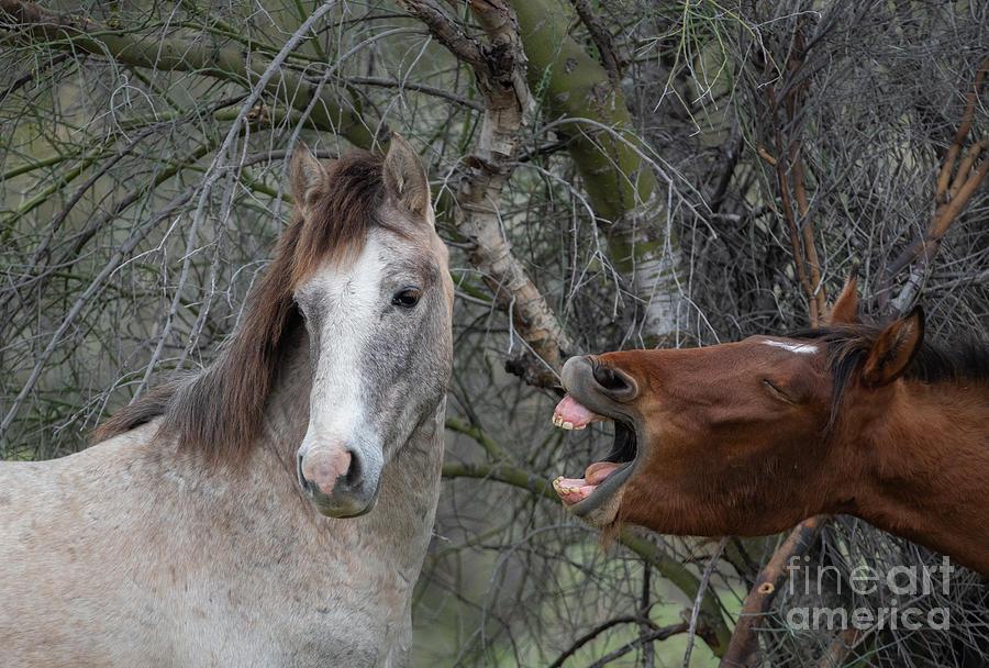 Whempf  Mustang Breath by Lisa Manifold